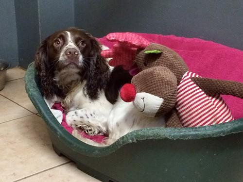 Clean Dog Bedding