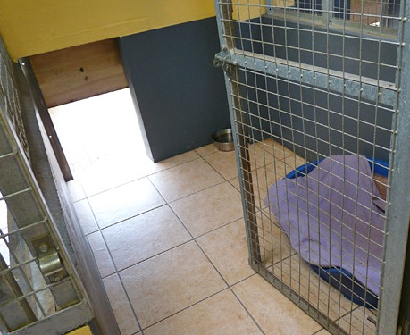 All Our Dog Kennels are cleaned and disinfected on a daily basis